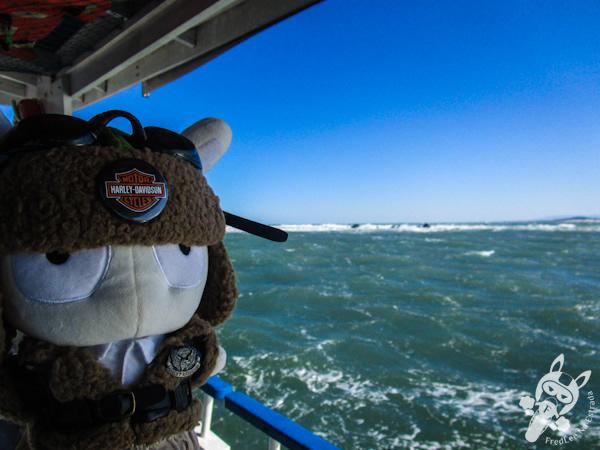 Leões marinhos na Ilha dos Lobos | Marina Barcos | Torres - RS | FredLee Na Estrada