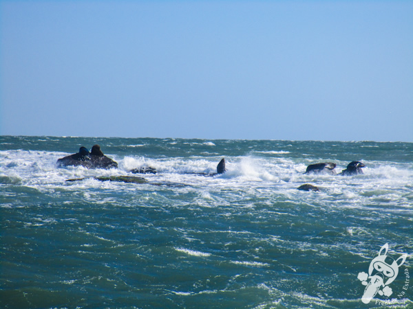 Ilha dos Lobos - Torres - RS