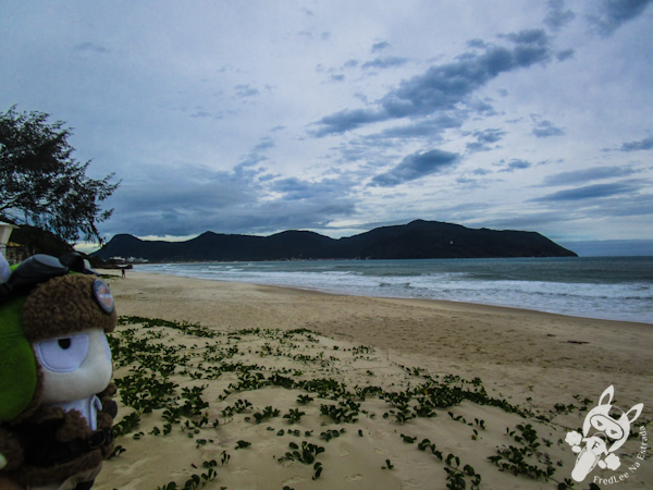 Praia da Solidão - Florianópolis - SC