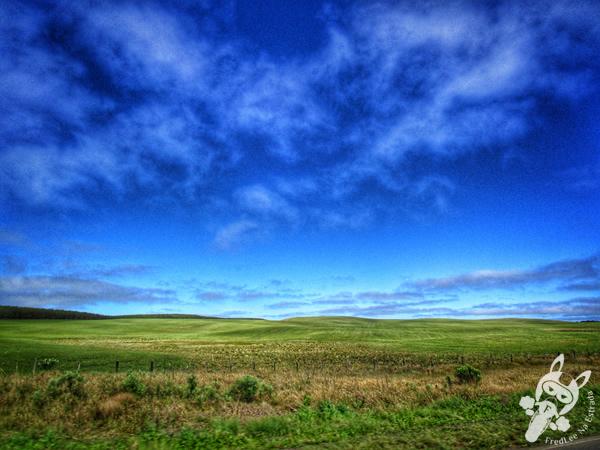 Campos de Palmas | Rodovia PR-280 | FredLee na Estrada