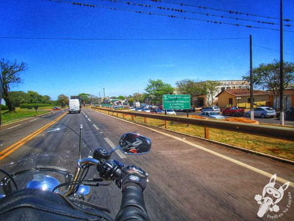 Cachorrinho em Santa Terezinha do Itaipu - PR