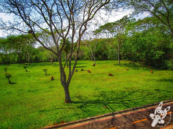Gramadão da Vila A | Foz do Iguaçu - PR