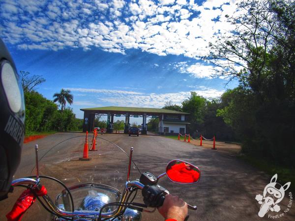Quati - Parque Nacional Iguazú | Puerto Iguazú - Misiones - Argentina