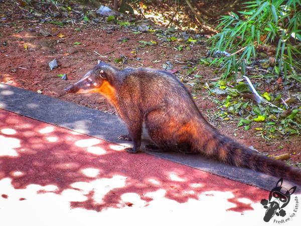 Paseo Inferior - Parque Nacional Iguazú | Puerto Iguazú - Misiones - Argentina