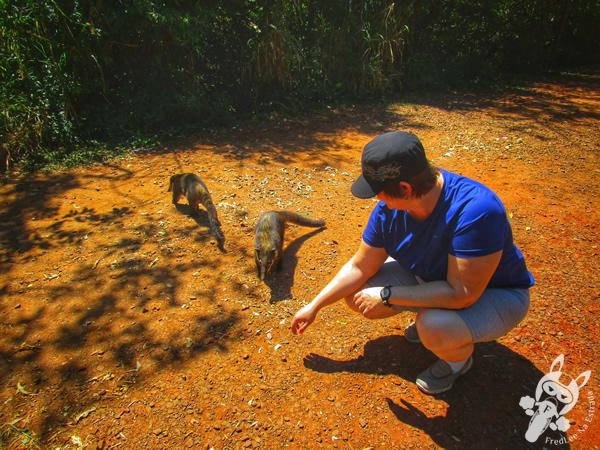 Cataratas del Iguazú - Parque Nacional Iguazú | Puerto Iguazú - Misiones - Argentina