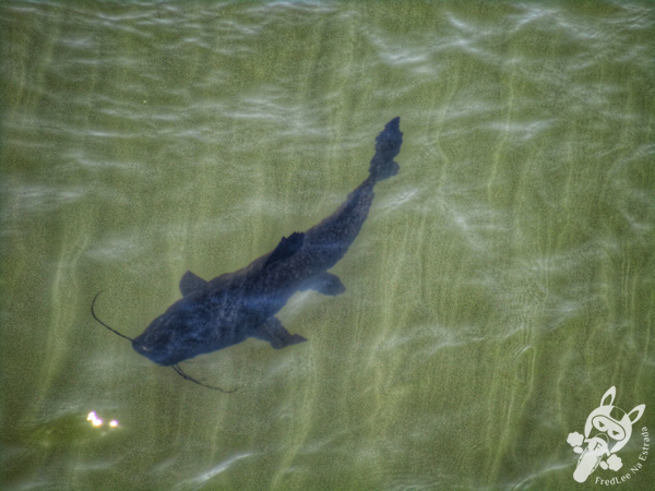 Aventura Náutica - Iguazú Jungle | Parque Nacional Iguazú | Puerto Iguazú - Misiones - Argentina