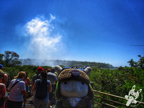 Tucano no Parque Nacional Iguazú | Puerto Iguazú - Misiones - Argentina