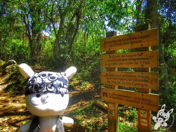 Engenho na Trilha da Costa da Lagoa via Canto dos Araçás | Florianópolis - SC