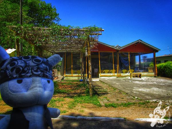 Gaivota na Costa da Lagoa | Florianópolis - SC