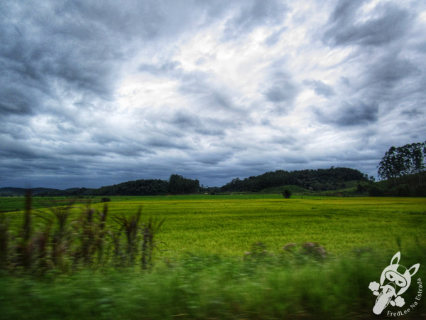 Plantação de banana - rodovia SC-415   FredLee Na Estrada