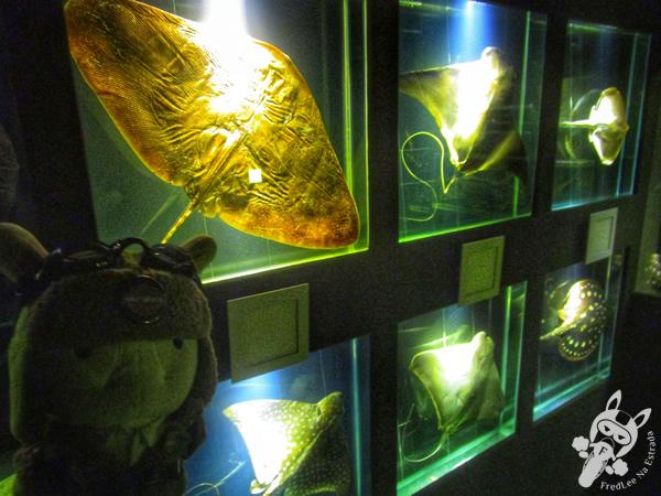 Museu Oceanográfico Univali - Balneário Piçarras - SC | FredLee Na Estrada