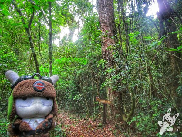 Parque Provincial Moconá | FredLee Na Estrada