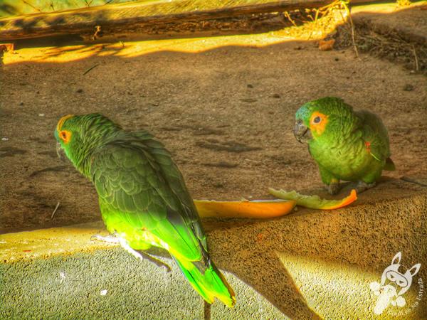 Papagaios em São Roque de Minas - MG | FredLee Na Estrada