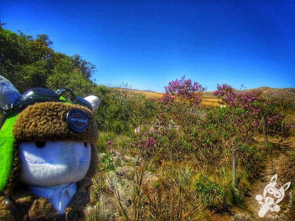 Veado campeiro - Parque Nacional da Serra da Canastra | FredLee Na Estrada