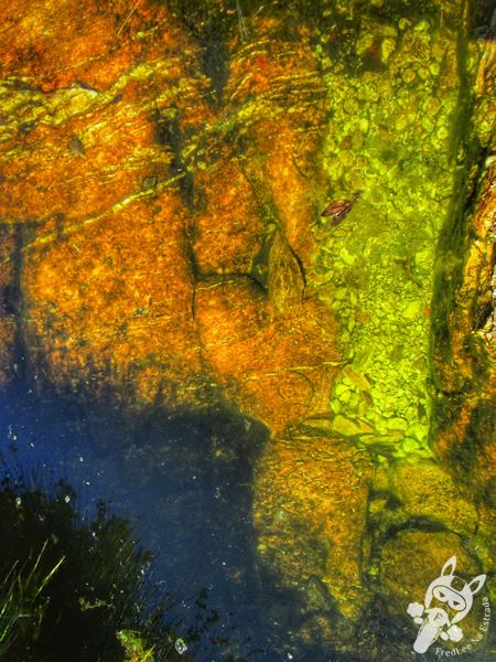 Parte alta da Cachoeira Casca d'Anta - Parque Nacional da Serra da Canastra | FredLee Na Estrada