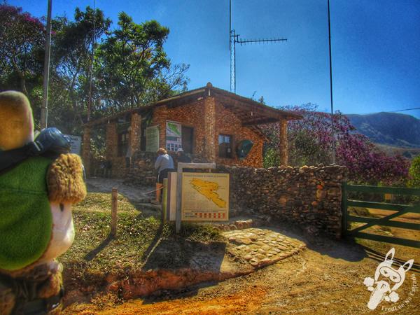 Sempre viva - Parque Nacional da Serra da Canastra | FredLee Na Estrada