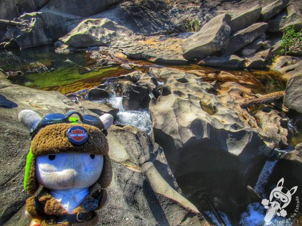Arara canindé - Chapada dos Veadeiros | FredLee Na Estrada