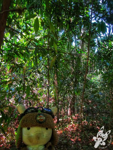 Cachoeira do Escorrega Macaco | Taquaruçu - Palmas - TO | FredLee Na Estrada