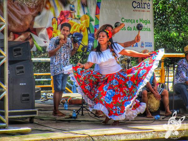 Pé de açaí em Alter do Chão | Santarém - PA | FredLee Na Estrada