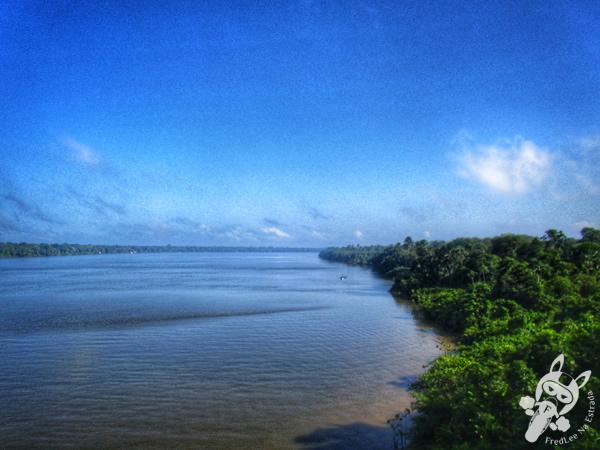 Plantação de palmeira no Pará | FredLee Na Estrada