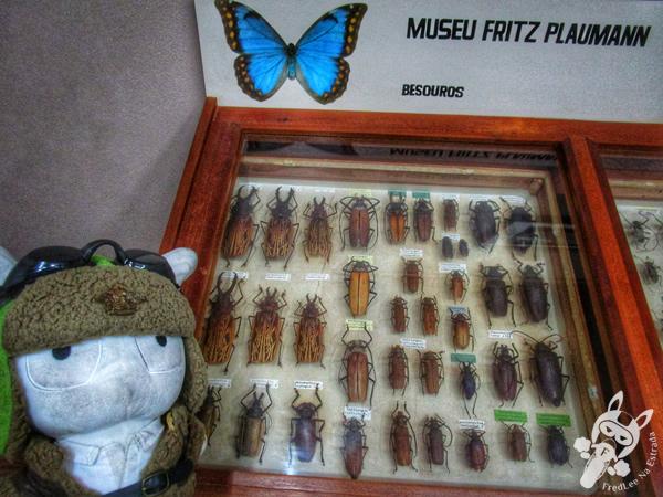 Museu Entomológico Fritz Plaumann | Seara - SC | FredLee Na Estrada