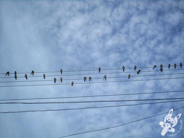 Pássaros | Irani - Santa Catarina - Brasil | FredLee Na Estrada