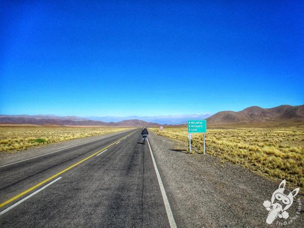 Ruta Provincial 33 | Parque Nacional los Cardones - Valles Calchaquíes - Argentina | FredLee Na Estrada