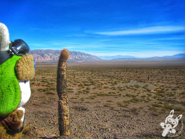 Ruta Nacional 40 | Payogasta - Salta - Argentina | FredLee Na Estrada