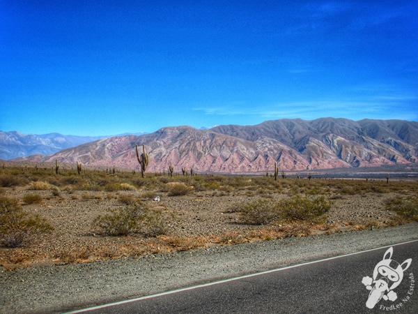 Ruta Nacional 40 | Valles Calchaquíes - Argentina | FredLee Na Estrada