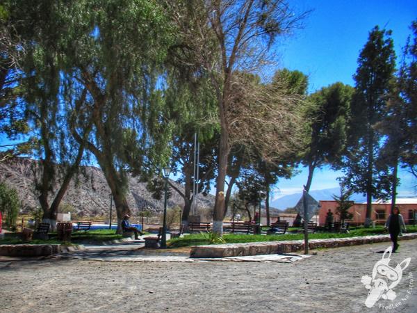 Ruta Nacional 40 - Valles Calchaquíes | Payogasta - Salta - Argentina | FredLee Na Estrada