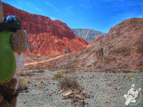Él cóndor en Paseo de los Colorados | Purmamarca - Jujuy - Argentina | FredLee Na Estrada