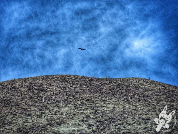 El cóndor - Paseo de los Colorados | Purmamarca - Jujuy - Argentina | FredLee Na Estrada
