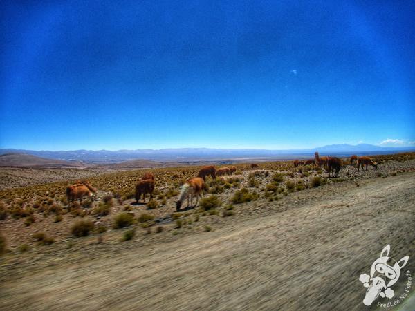 Ruta Nacional 52 | Argentina | FredLee Na Estrada
