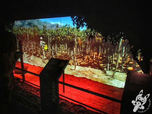 Museo de la Vid y el Vino | Cafayate - Salta - Argentina | FredLee Na Estrada