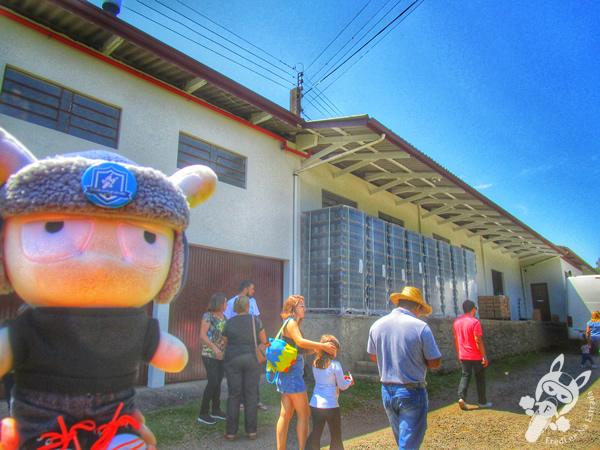 Vinícola Masotti - Tour Linha Bella | Gramado - RS | FredLee Na Estrada