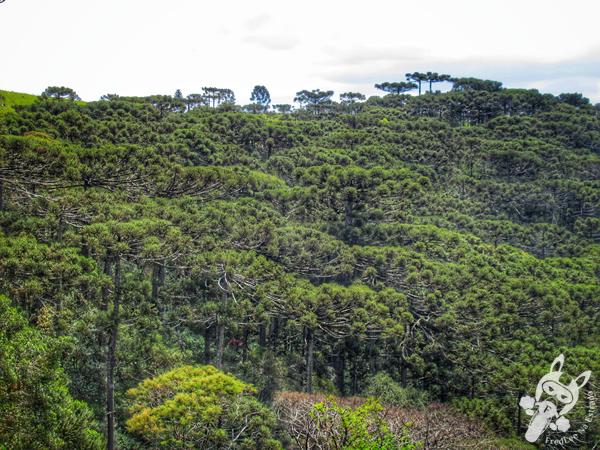Mirante dos Pinheiros - Mirante das Araucárias | São Joaquim - Santa Catarina - Brasil | FredLee Na Estrada