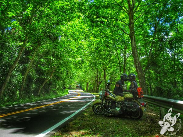 Rota Romântica | Rodovia BR-116 - Rio Grande do Sul - Brasil | FredLee Na Estrada