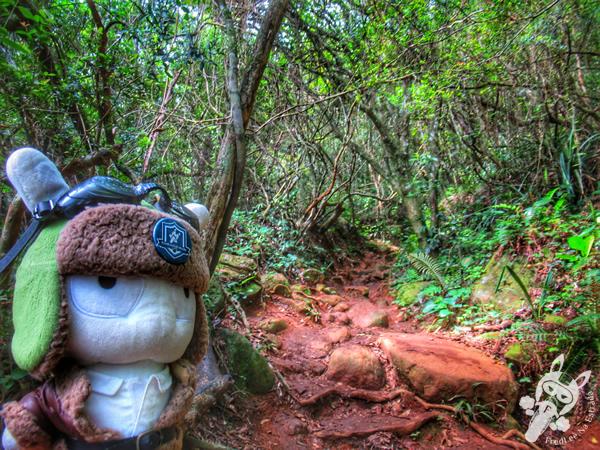 Trilha da Pedra do Urubu - Guarda do Embaú | Palhoça - Santa Catarina - Brasil | FredLee Na Estrada