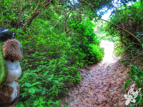 Trilha da Prainha - Guarda do Embaú | Palhoça - Santa Catarina - Brasil | FredLee Na Estrada
