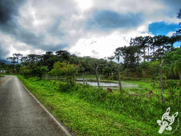 Estrada da Graciosa | FredLee Na Estrada