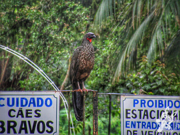 Jacu | Morretes - Paraná - Brasil | FredLee Na Estrada
