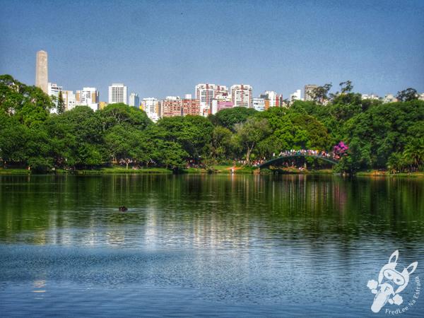 Parque Ibirapuera   São Paulo - São Paulo - Brasil   FredLee Na Estrada