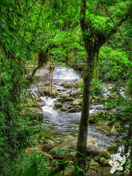 Poço do Tarzan | Paraty - Rio de Janeiro - Brasil | FredLee Na Estrada