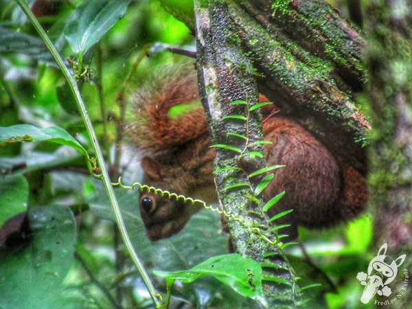 Caxinguelê | Parque Nacional da Serra dos Órgãos - Parnaso - ICMBio - Sede Guapimirim | FredLee Na Estrada