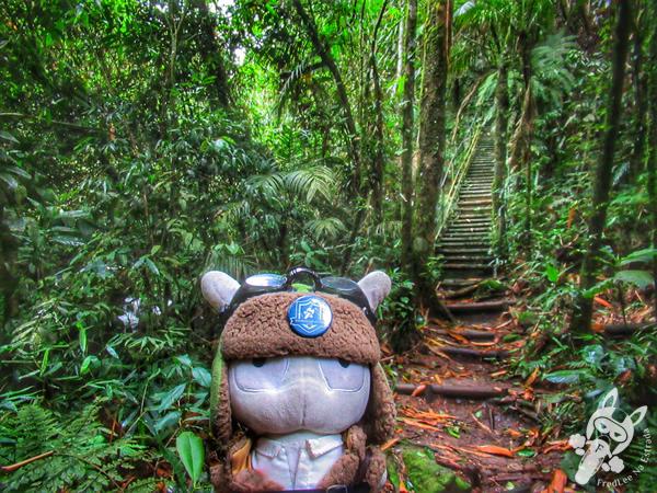 Trilha Suspensa - Parque Nacional da Serra dos Órgãos - Parnaso - ICMBio - Sede Teresópolis | FredLee Na Estrada