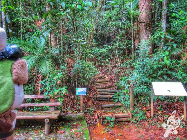 Trilha da Primavera - Parque Nacional da Serra dos Órgãos – Parnaso | Teresópolis - Rio de Janeiro - Brasil | FredLee Na Estrada
