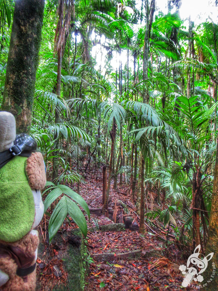 Trilha 360 - Parque Nacional da Serra dos Órgãos – Parnaso | Teresópolis - Rio de Janeiro - Brasil | FredLee Na Estrada