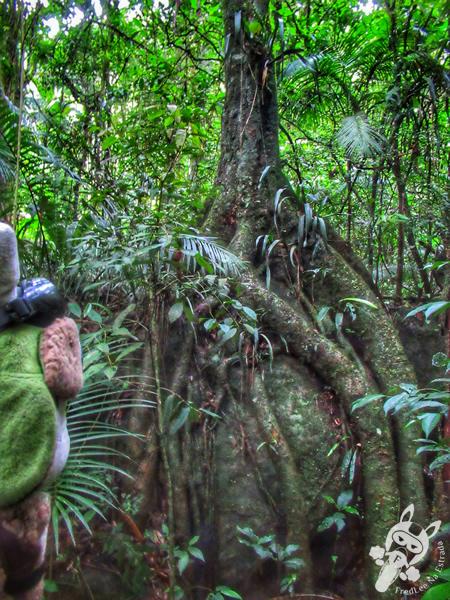 Trilha Poço Dois Irmãos - Parque Nacional da Serra dos Órgãos – Parnaso | Teresópolis - Rio de Janeiro - Brasil | FredLee Na Estrada