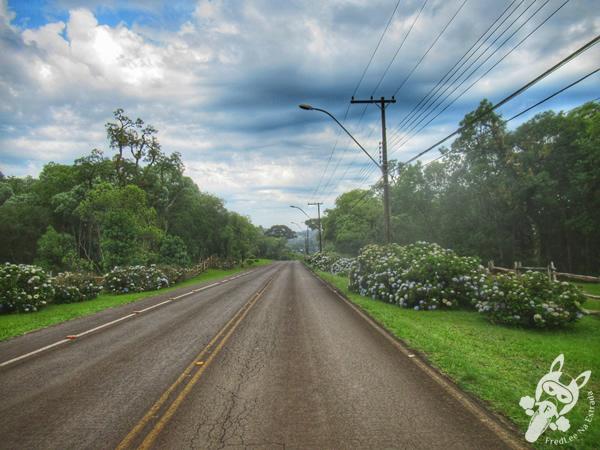 Faxinal do Céu - Pinhão - Paraná - Brasil   FredLee Na Estrada