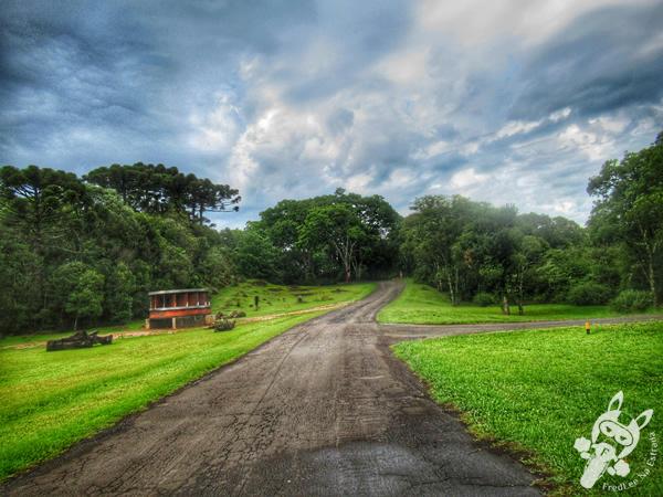 Faxinal do Céu - Pinhão - Paraná - Brasil | FredLee Na Estrada
